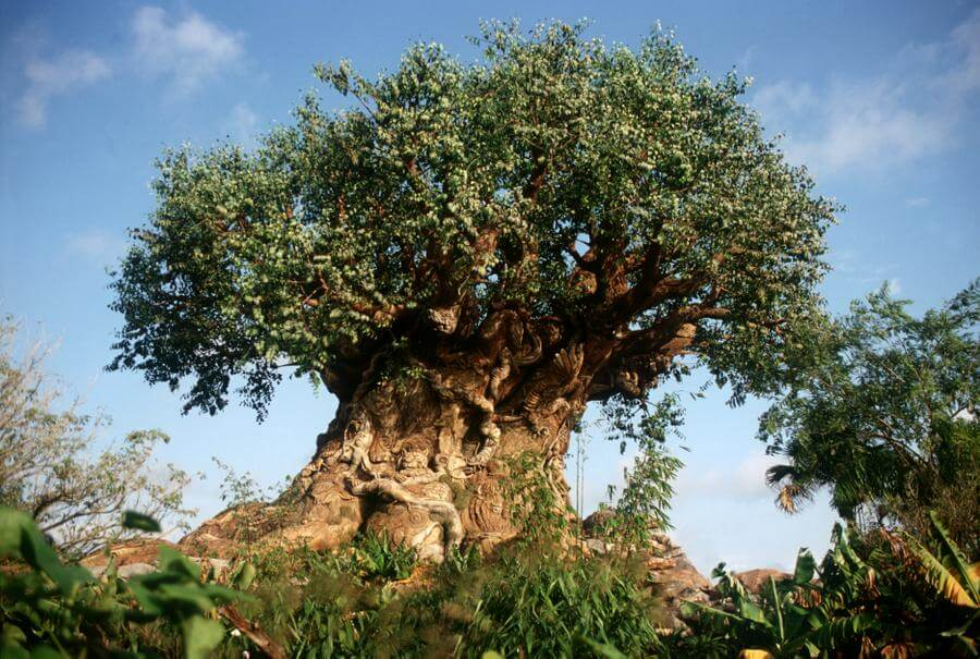 Disney's Animal Kingdom | Disney Discount Tickets, Crowds ...