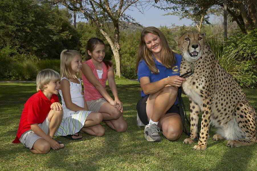 San diego zoo safari park super discount guest coupon